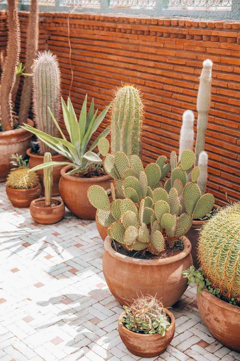 KSAR KASBAH & SPA MARRAKECH terrasse cactus